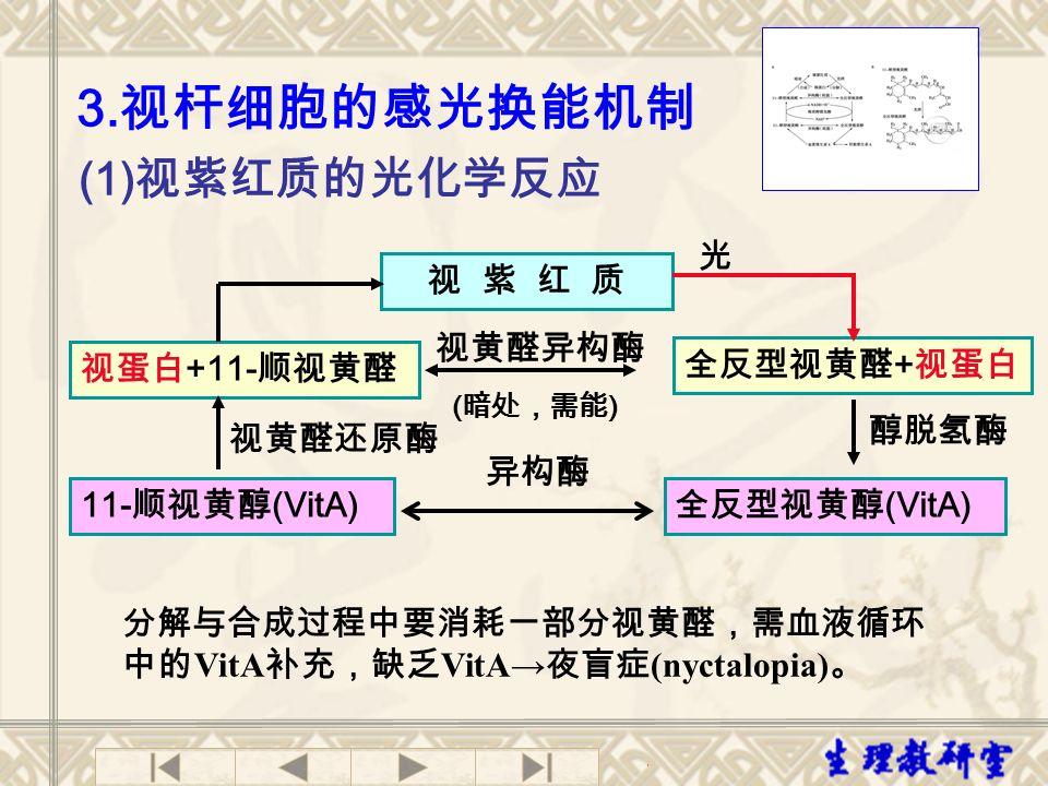 3.视杆细胞的感光换能机制 (1)视紫红质的光化学反应 视 紫 红 质 光 视蛋白+11-顺视黄醛 视黄醛还原酶 11-顺视黄醇(VitA)