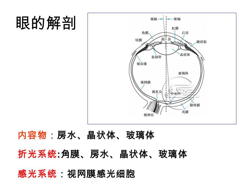 眼的解剖 内容物:房水、晶状体、玻璃体 折光系统:角膜、房水、晶状体、玻璃体 感光系统:视网膜感光细胞