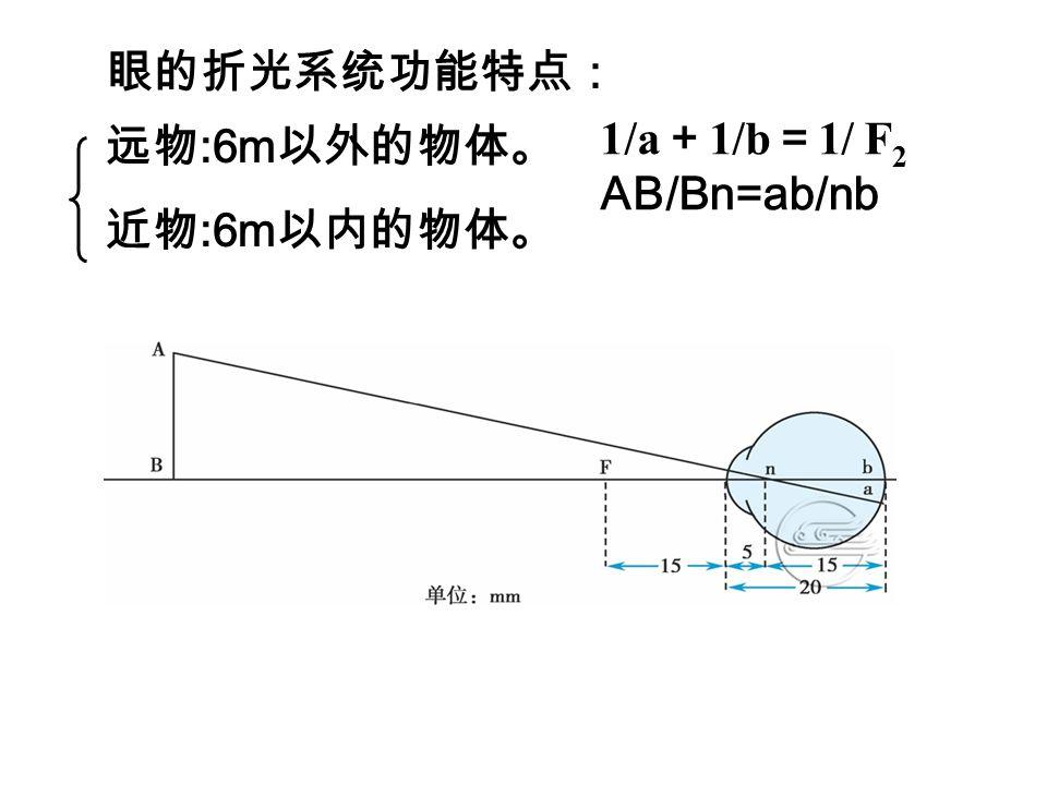 眼的折光系统功能特点: 1/a+1/b=1/ F2 AB/Bn=ab/nb 远物:6m以外的物体。 近物:6m以内的物体。