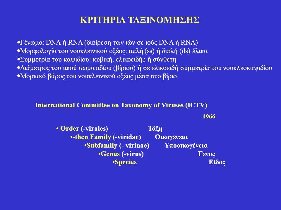 ΚΡΙΤΗΡΙΑ ΤΑΞΙΝΟΜΗΣΗΣ Γένωμα: DNA ή RNA (διαίρεση των ιών σε ιούς DNA ή RNA) Mορφολογία του νουκλεινικού οξέος: απλή (ss) ή διπλή (ds) έλικα.