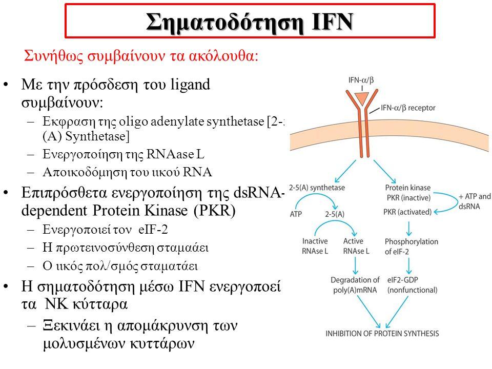 Σηματοδότηση IFN Συνήθως συμβαίνουν τα ακόλουθα: