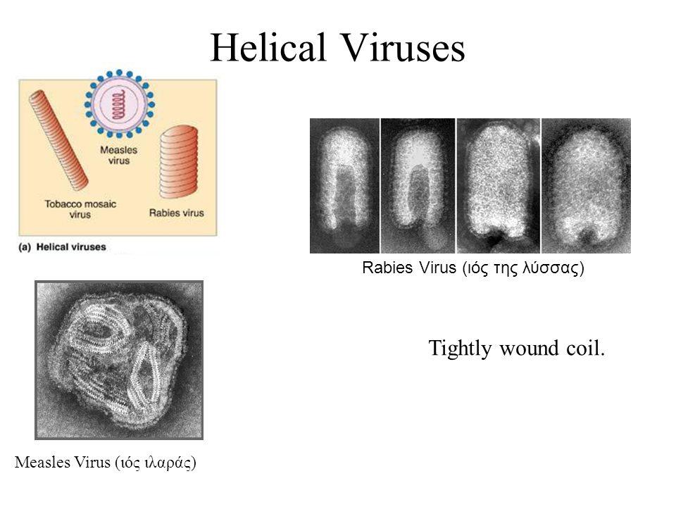 Rabies Virus (ιός της λύσσας)