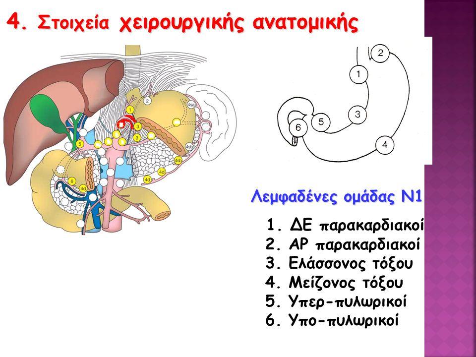 4. Στοιχεία χειρουργικής ανατομικής