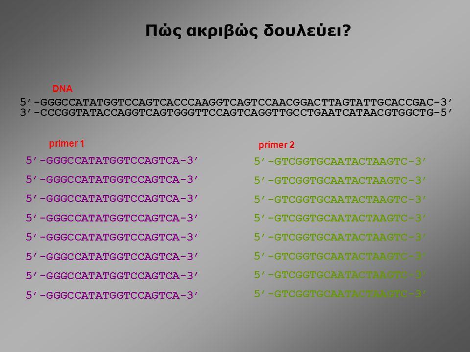 Πώς ακριβώς δουλεύει DNA. 5'-GGGCCATATGGTCCAGTCACCCAAGGTCAGTCCAACGGACTTAGTATTGCACCGAC-3'