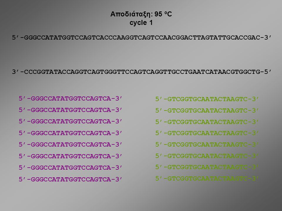 Αποδιάταξη: 95 ºC cycle 1. 5'-GGGCCATATGGTCCAGTCACCCAAGGTCAGTCCAACGGACTTAGTATTGCACCGAC-3'