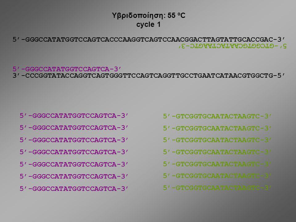 Υβριδοποίηση: 55 ºC cycle 1. 5'-GGGCCATATGGTCCAGTCACCCAAGGTCAGTCCAACGGACTTAGTATTGCACCGAC-3' 5'-GTCGGTGCAATACTAAGTC-3'