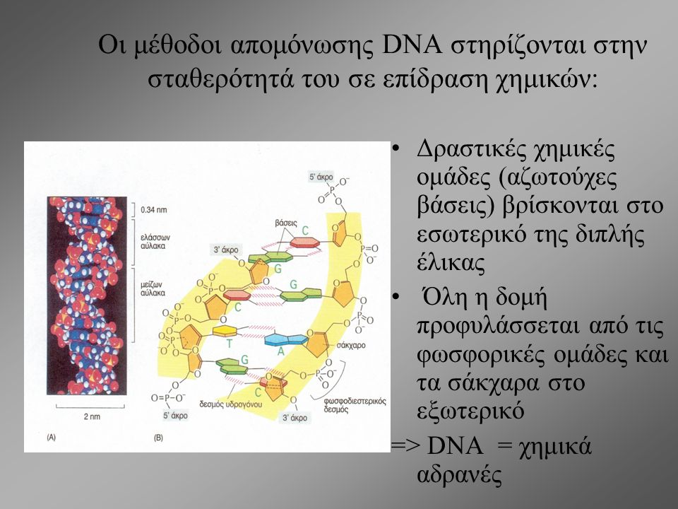 Oι μέθοδοι απομόνωσης DNA στηρίζονται στην σταθερότητά του σε επίδραση χημικών: