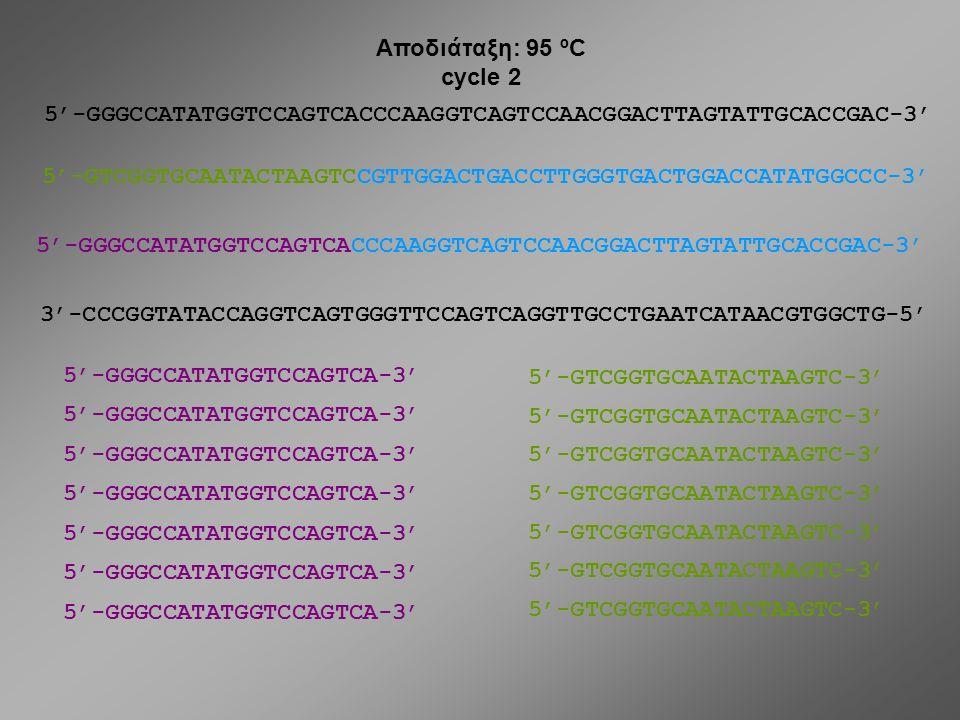 Αποδιάταξη: 95 ºC cycle 2. 5'-GGGCCATATGGTCCAGTCACCCAAGGTCAGTCCAACGGACTTAGTATTGCACCGAC-3'