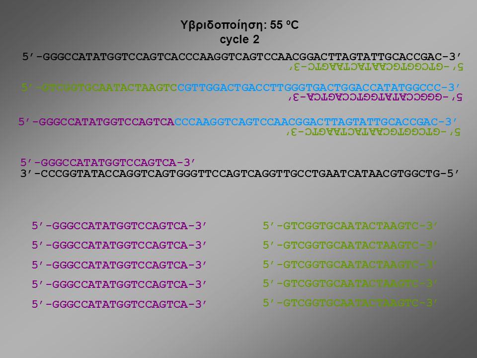 Υβριδοποίηση: 55 ºC cycle 2. 5'-GGGCCATATGGTCCAGTCACCCAAGGTCAGTCCAACGGACTTAGTATTGCACCGAC-3' 5'-GTCGGTGCAATACTAAGTC-3'