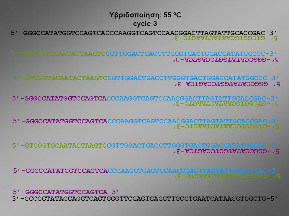 Υβριδοποίηση: 55 ºC cycle 3. 5'-GGGCCATATGGTCCAGTCACCCAAGGTCAGTCCAACGGACTTAGTATTGCACCGAC-3' 5'-GTCGGTGCAATACTAAGTC-3'