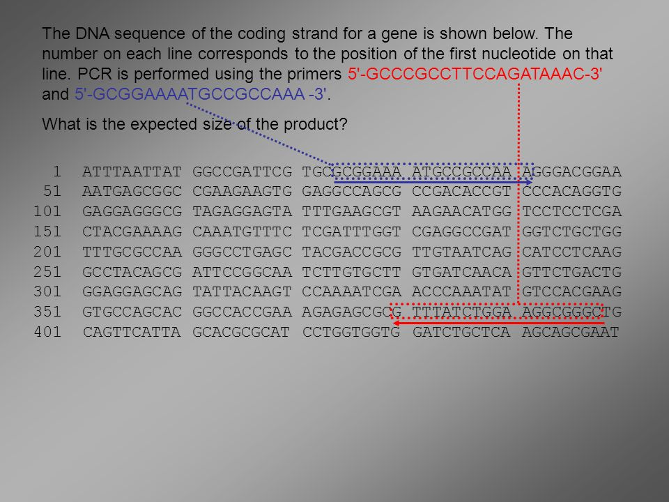 The DNA sequence of the coding strand for a gene is shown below