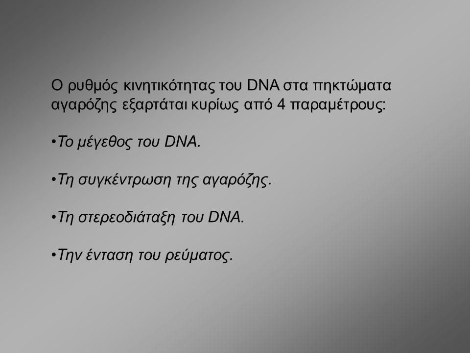 Ο ρυθμός κινητικότητας του DNA στα πηκτώματα αγαρόζης εξαρτάται κυρίως από 4 παραμέτρους: