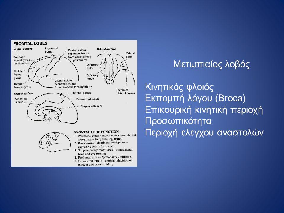 Μετωπιαίος λοβός Κινητικός φλοιός. Εκπομπή λόγου (Broca) Επικουρική κινητική περιοχή. Προσωπικότητα.