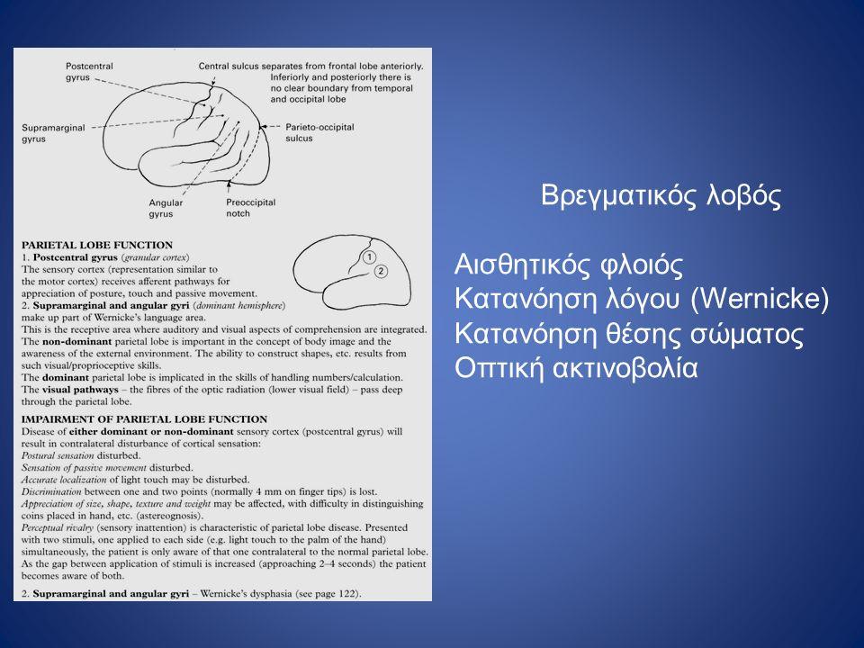 Βρεγματικός λοβός Αισθητικός φλοιός. Κατανόηση λόγου (Wernicke) Κατανόηση θέσης σώματος.