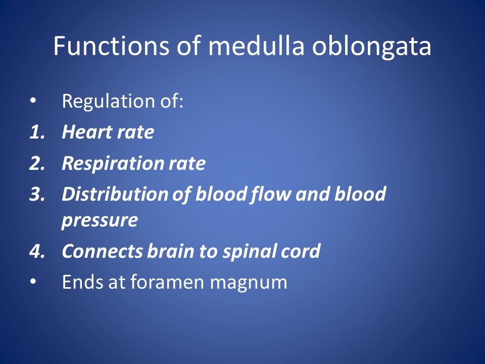 Functions of medulla oblongata