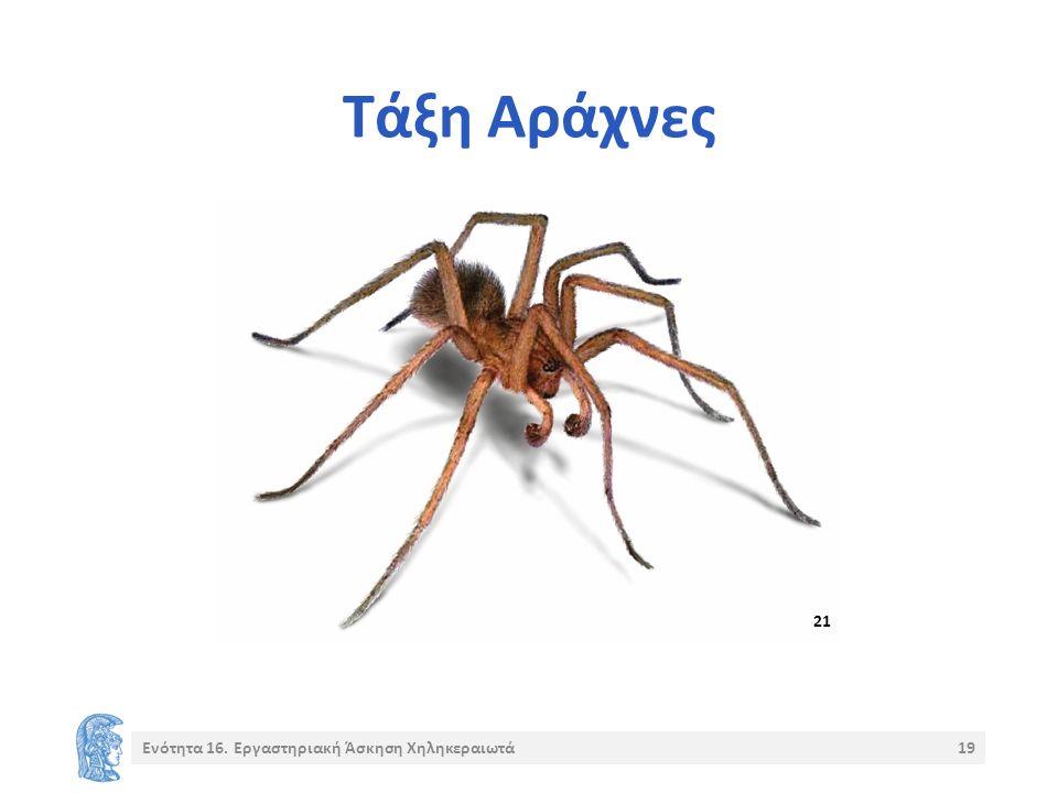 Τάξη Αράχνες 21 Ενότητα 16. Εργαστηριακή Άσκηση Χηληκεραιωτά