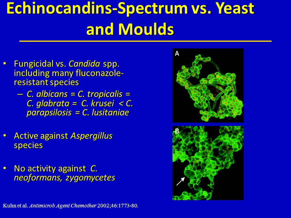 Echinocandins-Spectrum vs. Yeast and Moulds