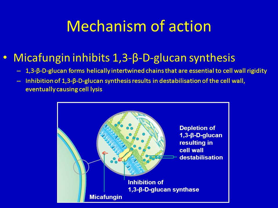 Mechanism of action Micafungin inhibits 1,3-β-D-glucan synthesis