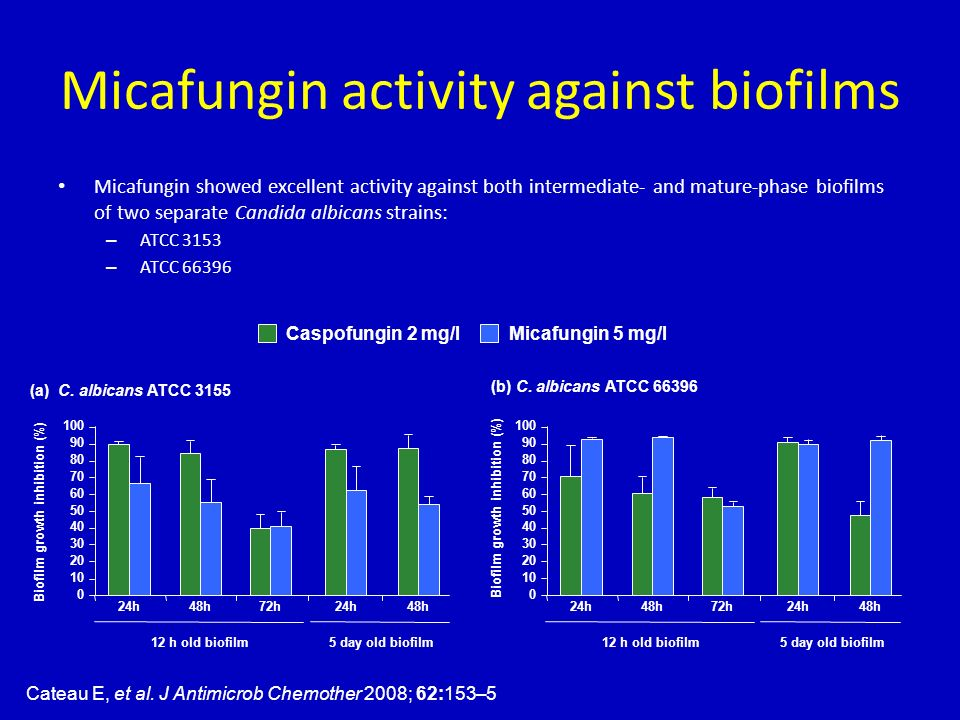 Micafungin activity against biofilms