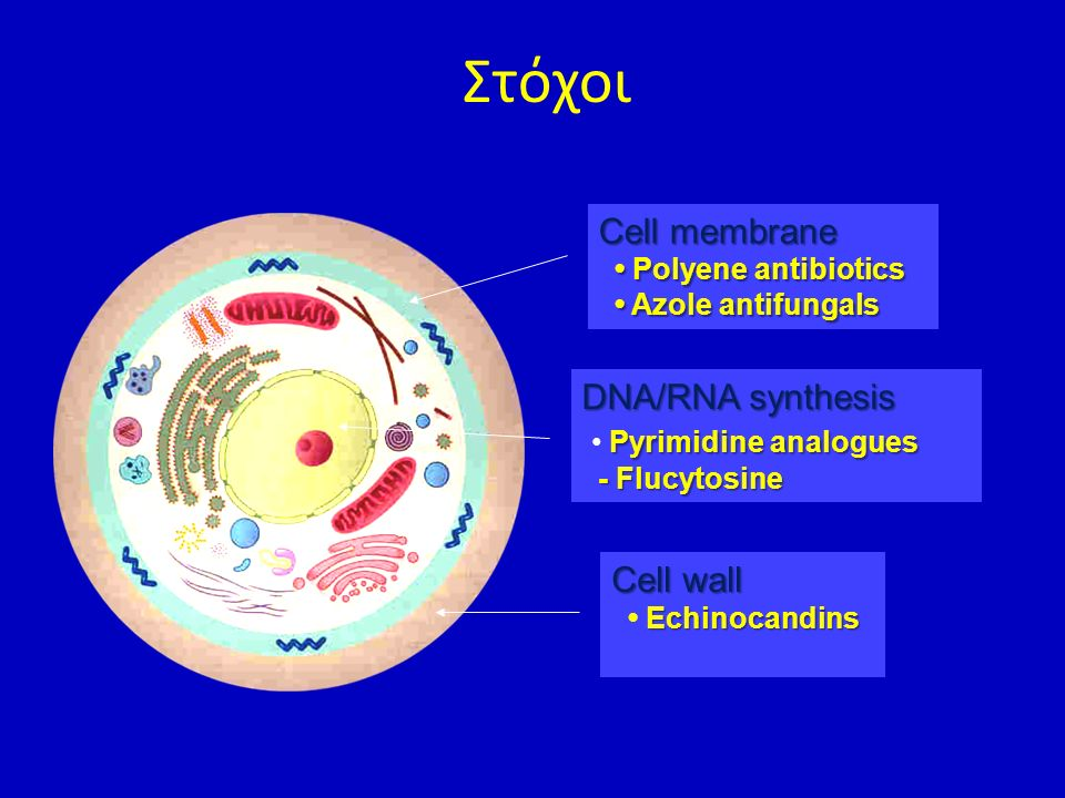 Στόχοι Cell membrane DNA/RNA synthesis • Pyrimidine analogues