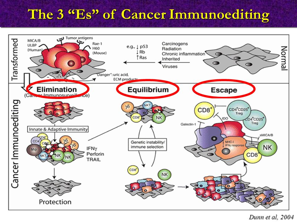 The 3 Es of Cancer Immunoediting