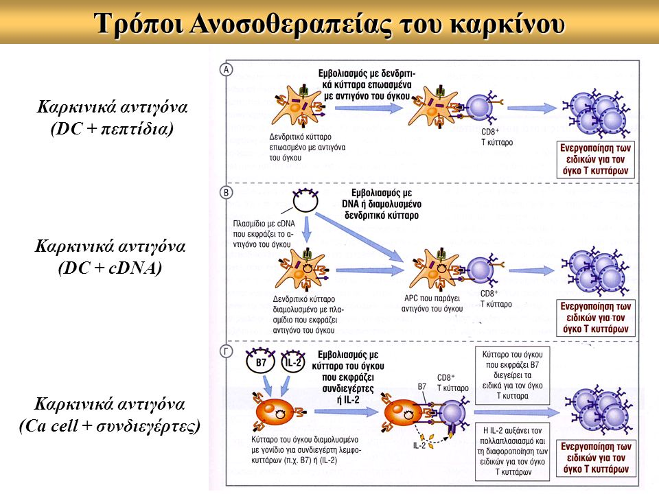 Τρόποι Ανοσοθεραπείας του καρκίνου (Ca cell + συνδιεγέρτες)