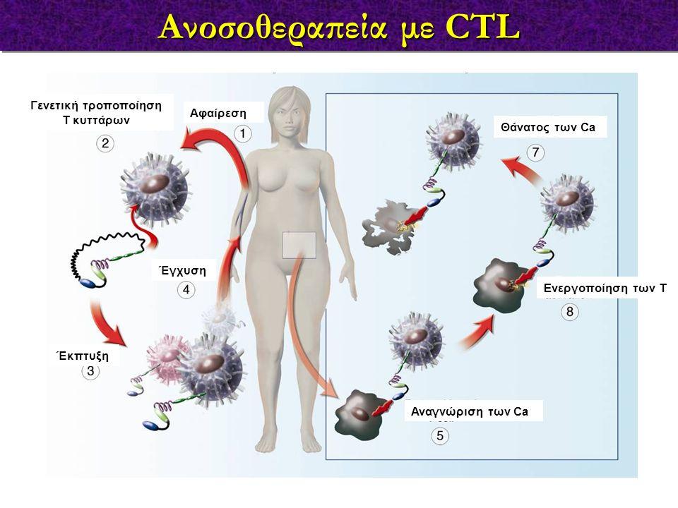 Ανοσοθεραπεία με CTL Έκπτυξη Γενετική τροποποίηση Τ κυττάρων Αφαίρεση