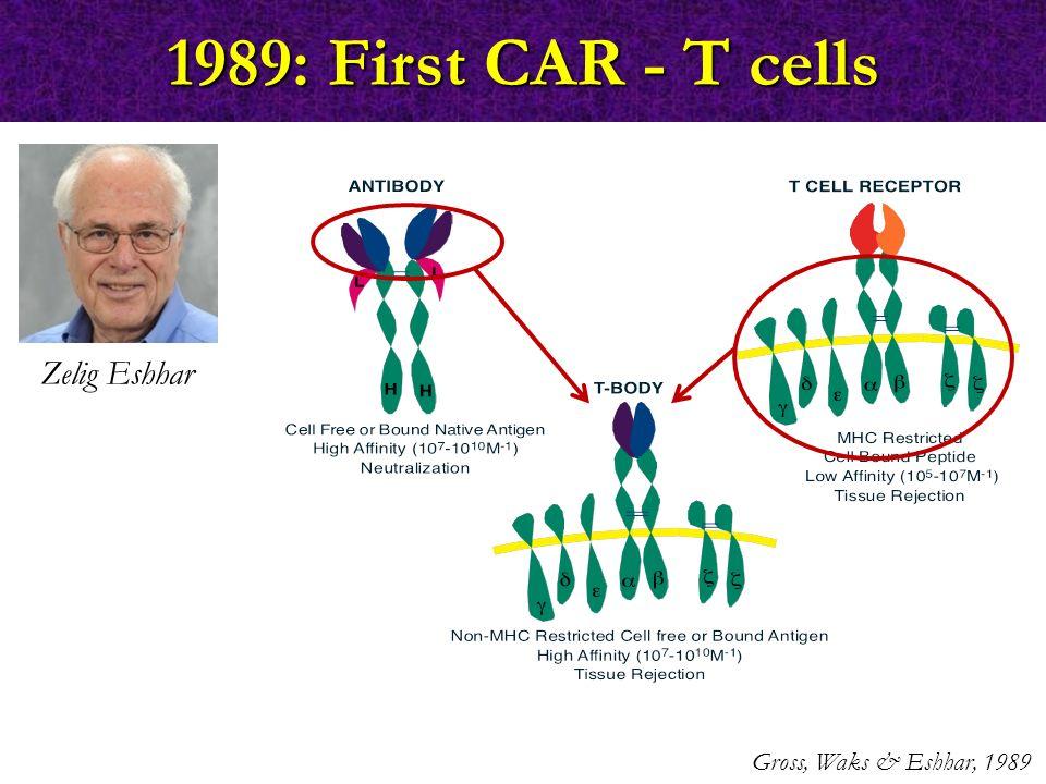 1989: First CAR - T cells Zelig Eshhar Gross, Waks & Eshhar, 1989