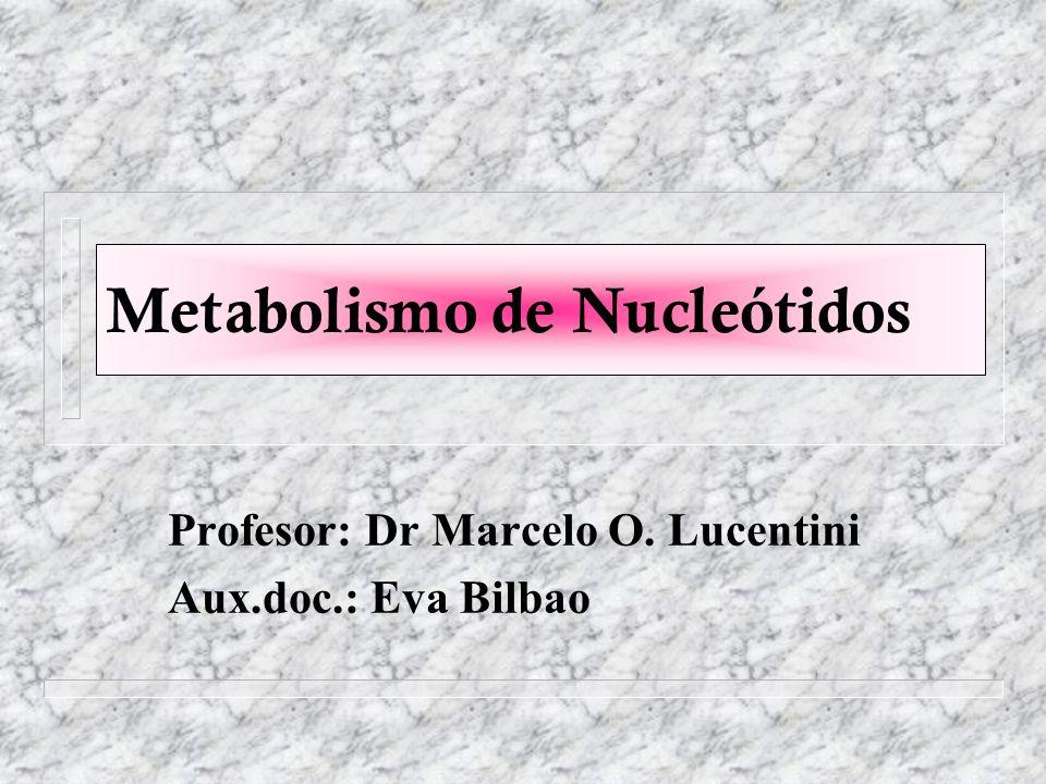 Metabolismo de Nucleótidos