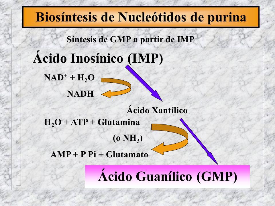 Biosíntesis de Nucleótidos de purina Síntesis de GMP a partir de IMP