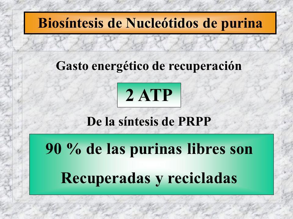 2 ATP 90 % de las purinas libres son Recuperadas y recicladas