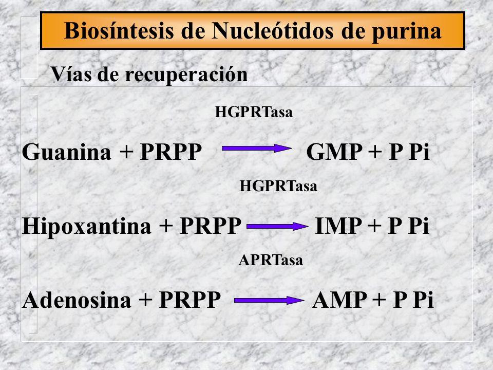 Biosíntesis de Nucleótidos de purina