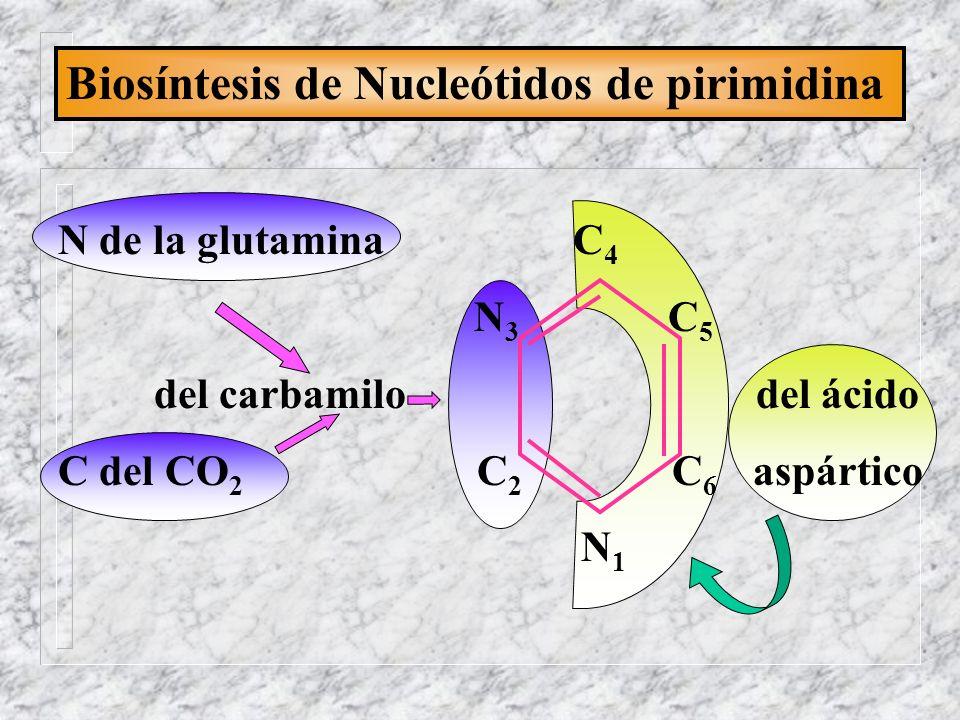 Biosíntesis de Nucleótidos de pirimidina