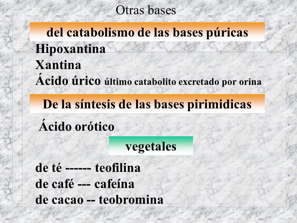 del catabolismo de las bases púricas Hipoxantina Xantina