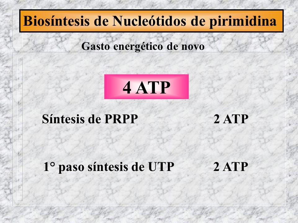 Gasto energético de novo 1° paso síntesis de UTP 2 ATP