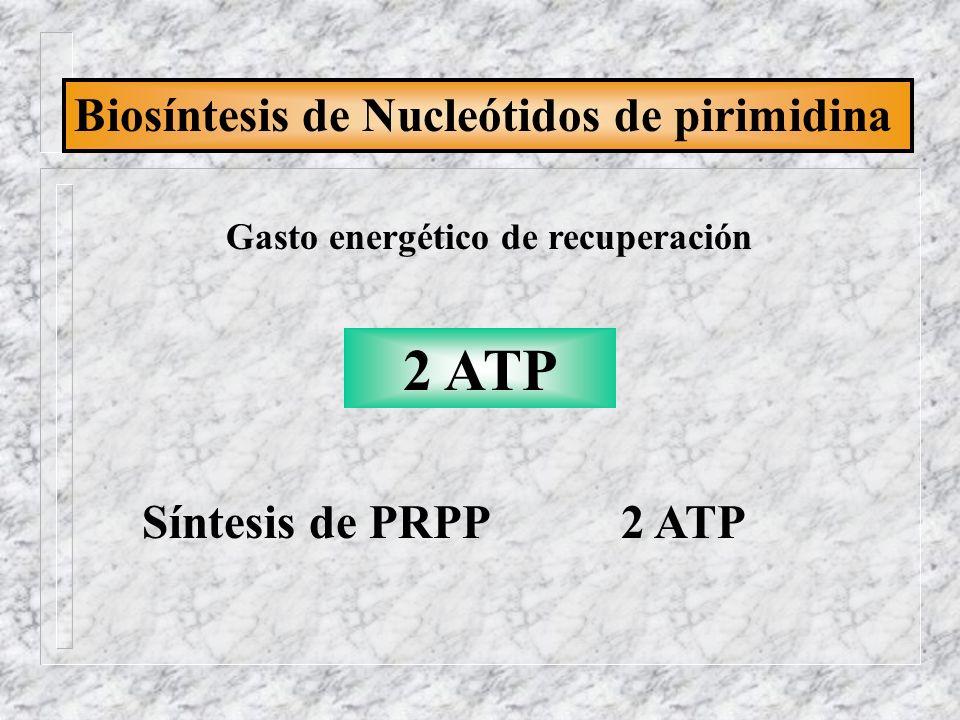 2 ATP Biosíntesis de Nucleótidos de pirimidina Síntesis de PRPP 2 ATP