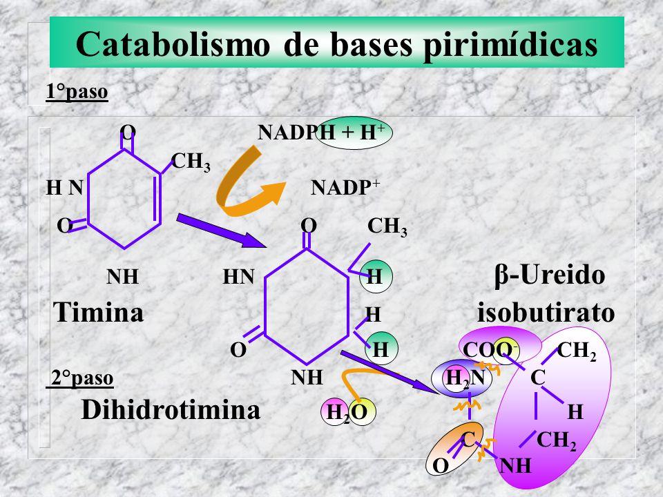 Catabolismo de bases pirimídicas