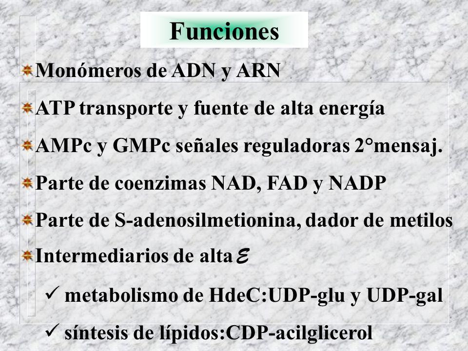 Funciones Monómeros de ADN y ARN