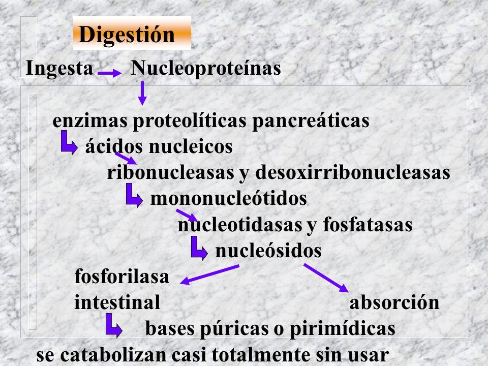 Digestión Ingesta Nucleoproteínas enzimas proteolíticas pancreáticas