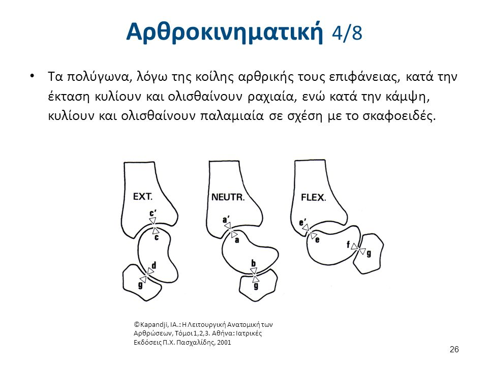 Αρθροκινηματική 5/8 Common radiographic imaging modalities fail to accurately predict capitate morphology.