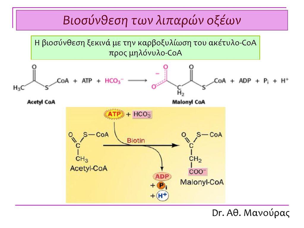 Βιοχημεία Μεταβολισμός λιπαρών οξέων Dr. Αθ. Μανούρας - ppt κατέβασμα
