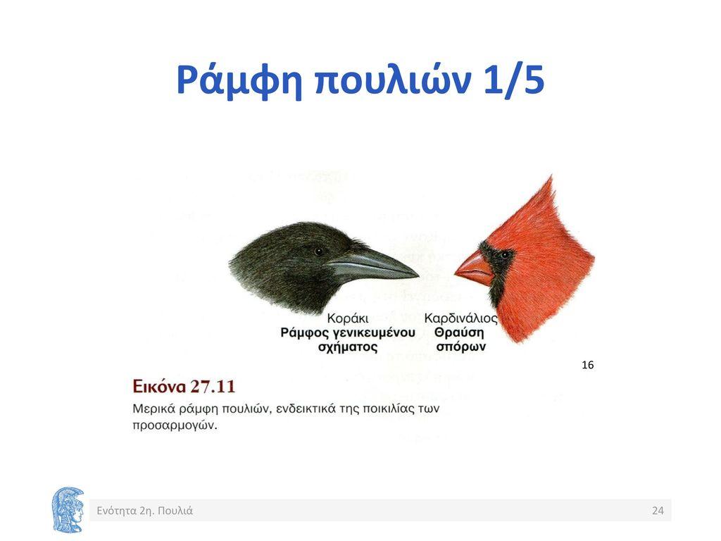 μεγάλο πουλί φορτίοΔεσποινίς Μονρό squirt