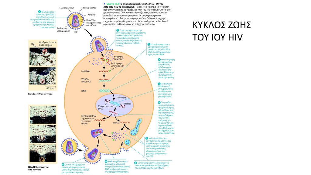που χρονολογούνται από τον HIV θετικό στην Κένυα