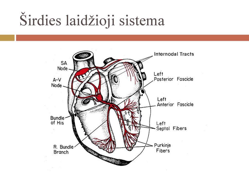 kaip yra hipertenzijos tyrimas