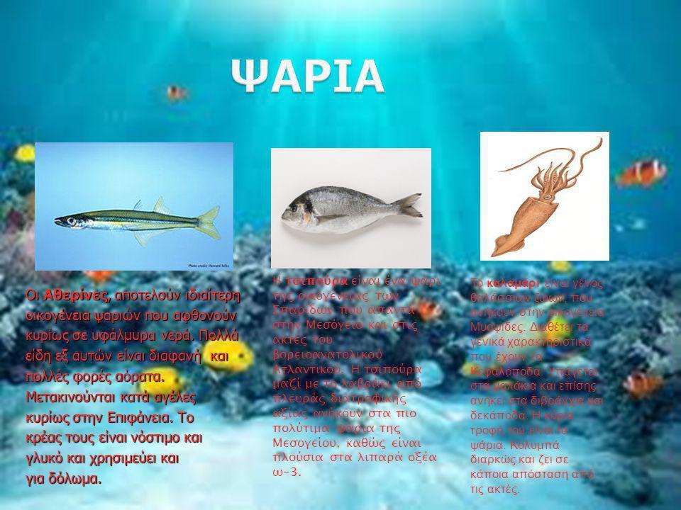 πολλά ψάρια που χρονολογούνται από το site Ηνωμένες Πολιτείες χρονολογίων ιστοσελίδες