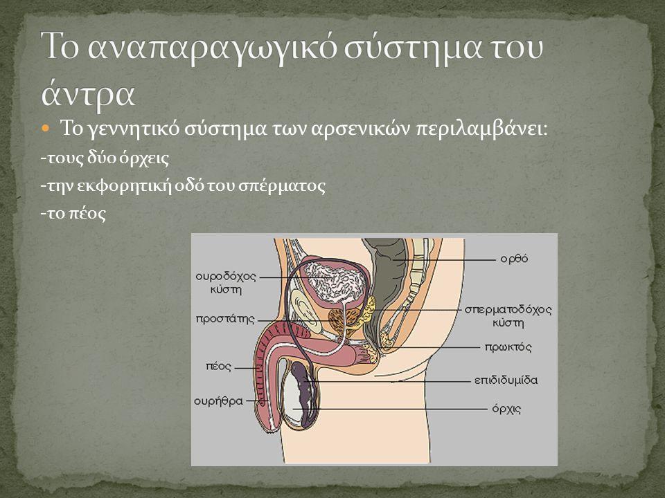 Gay πορνό άτακτος/η