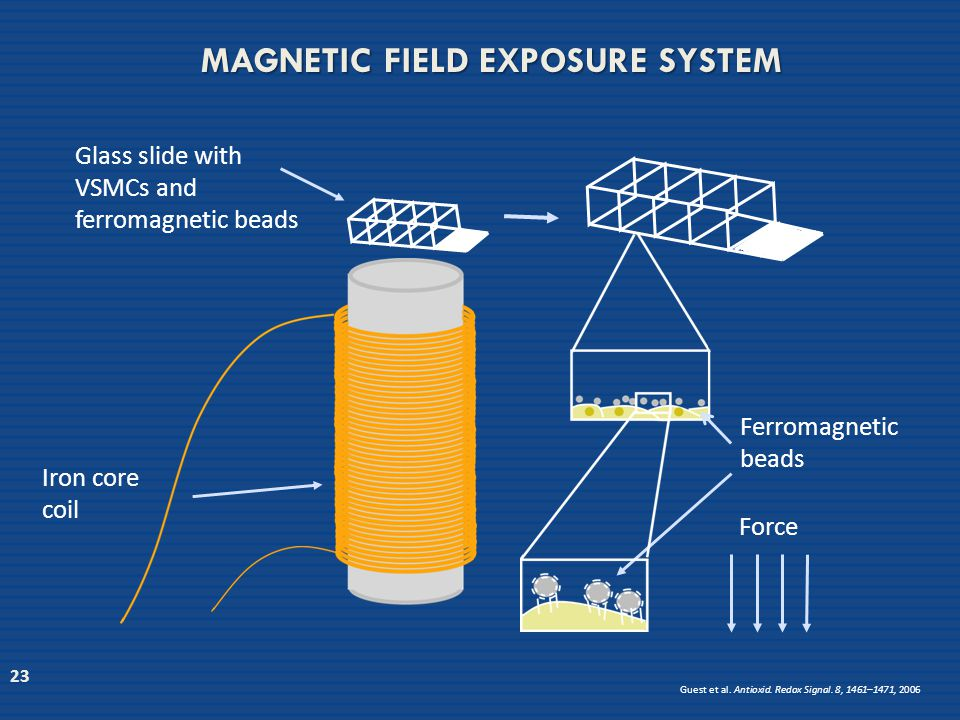 MAGNETIC FIELD EXPOSURE SYSTEM