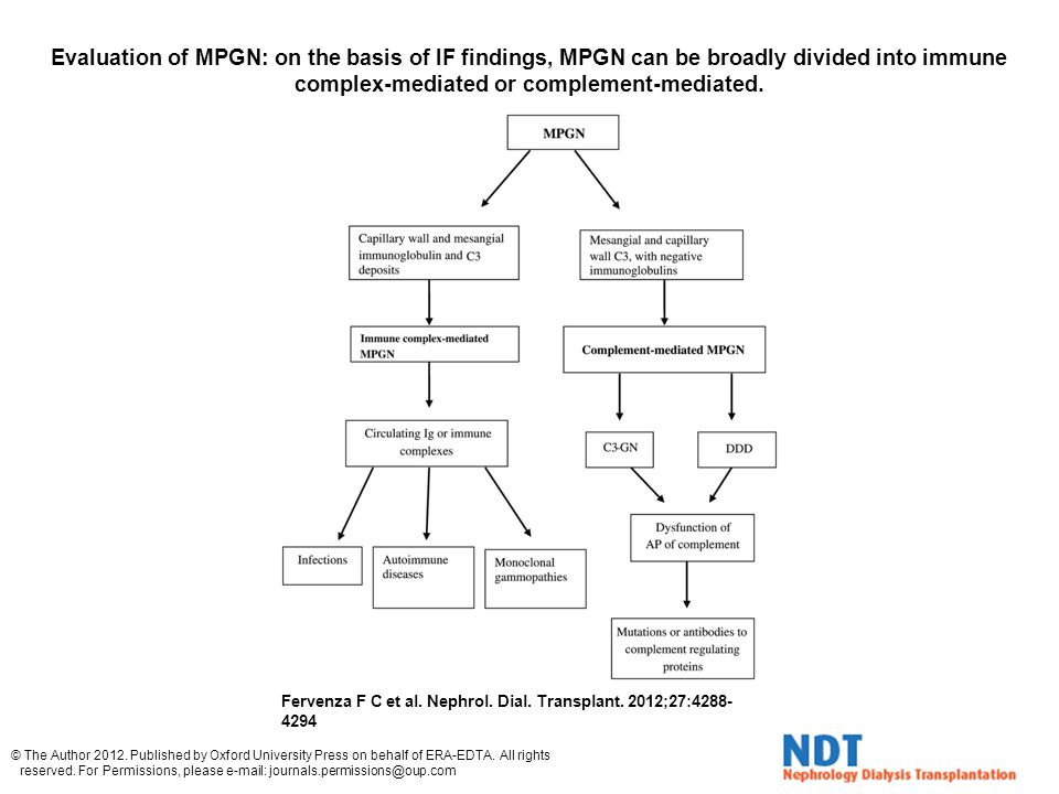Evaluation of MPGN: on the basis of IF findings, MPGN can be broadly divided into immune complex-mediated or complement-mediated.