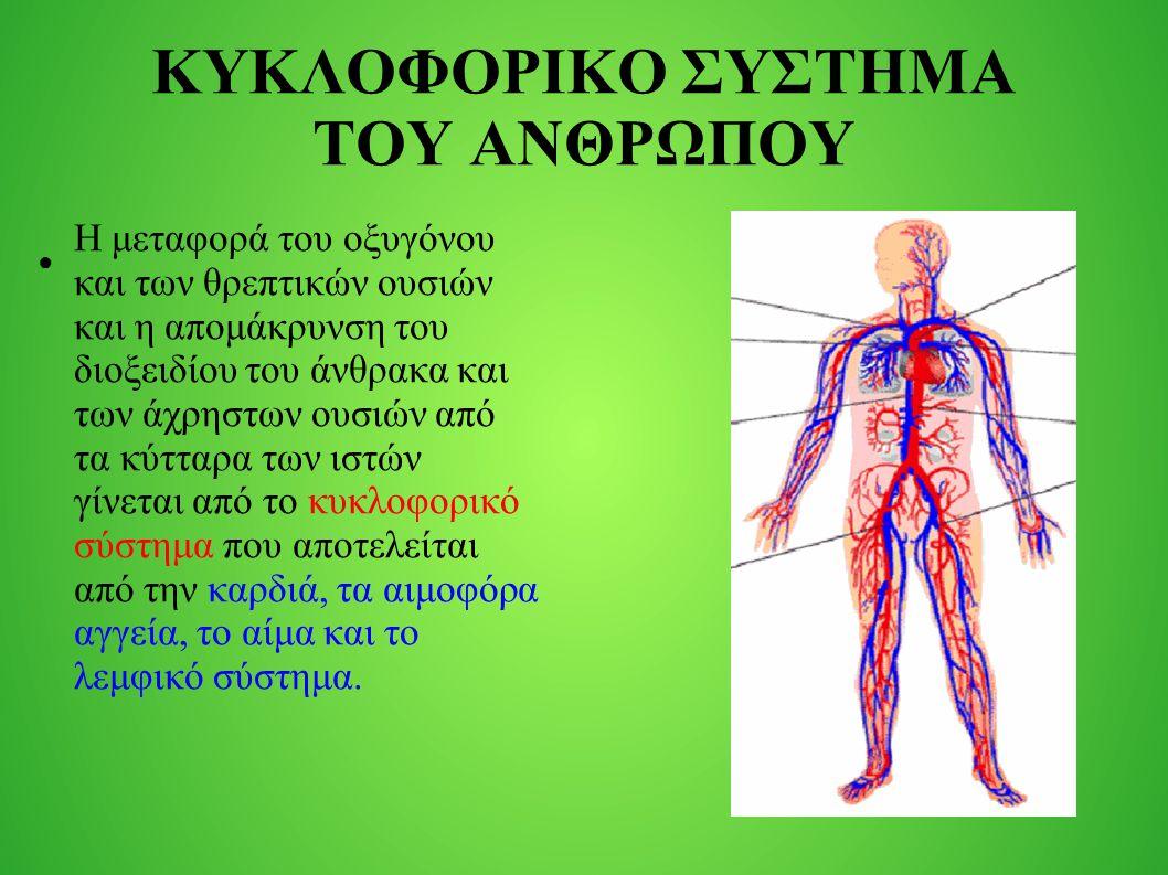 Αποτέλεσμα εικόνας για κυκλοφορικό σύστημα του ανθρώπου